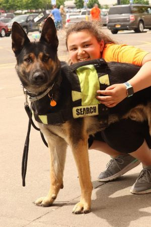 Gandhi gsd k9 addict dog training binghamton ny
