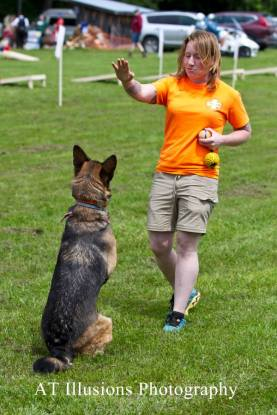 K9 Malala dog trainer binghamton ny k9 addict dog training german shepherd gsd