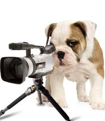 dog video search k9 binghamton ny